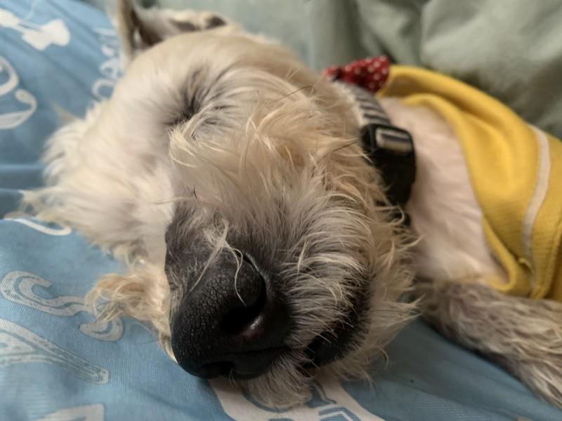 ハッピー寝る足バタバタ